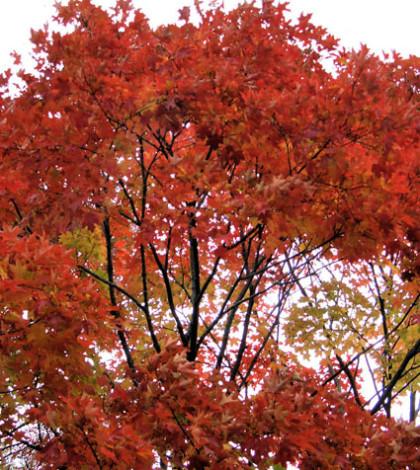 Herfst bomen Julia Veldkamp Duurzaam scheiden